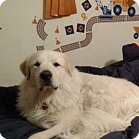 Adopt A Pet :: Aragorn - Lee, MA