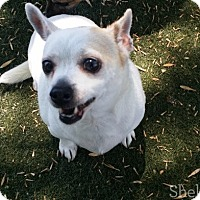 Adopt A Pet :: Squeeky - Meridian, ID
