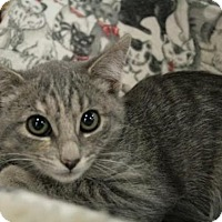 Adopt A Pet :: Wednesday - Sacramento, CA