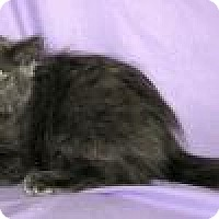 Adopt A Pet :: Merlot - Powell, OH