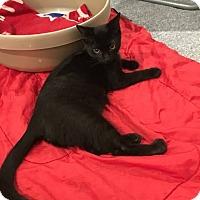 Adopt A Pet :: Fonzie - Turnersville, NJ