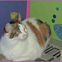 Calico Cat for adoption in Hawk Springs, Wyoming - Allspice