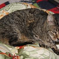 Adopt A Pet :: Carla (Spayed) - New Photos - Marietta, OH