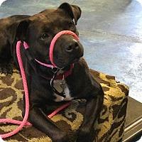 Adopt A Pet :: Tutsi - Grafton, OH