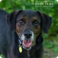 Adopt A Pet :: Bo - Edwardsville, IL