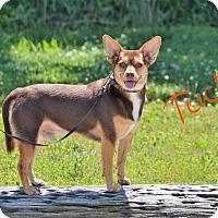 Adopt A Pet :: Tucker - Lebanon, MO