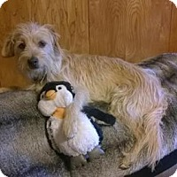 Adopt A Pet :: Marty - Great Bend, KS
