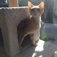 Adopt A Pet :: Gengar - Orlando, FL