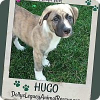 Adopt A Pet :: HUGO - Lincoln, NE