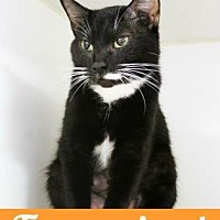 Adopt A Pet :: Biscuit - Atlanta, GA