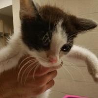 Adopt A Pet :: Alex - Cleveland, OH