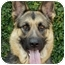 Photo 1 - German Shepherd Dog Dog for adoption in Los Angeles, California - Princess von Haritons