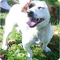 Adopt A Pet :: Queenie - Allentown, PA