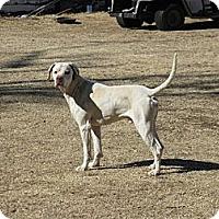 Adopt A Pet :: Caeser - Childress, TX