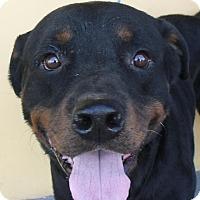 Adopt A Pet :: Mikel - Pembroke Pines, FL