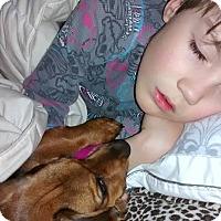 Adopt A Pet :: Arthur - Cornwall, ON