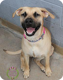 Mastiff/Hound (Unknown Type) Mix Dog for adoption in Sierra Vista, Arizona - Missy