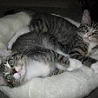 Adopt A Pet :: Tin Man - Arlington, TX