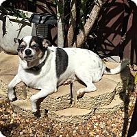 Adopt A Pet :: Benito Juarez - Davie, FL