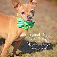 Adopt A Pet :: Chico - Fort Valley, GA