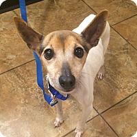 Adopt A Pet :: Cesar - Oak Ridge, NJ