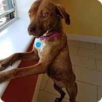 Adopt A Pet :: Liza Kiny - Philadelphia, PA