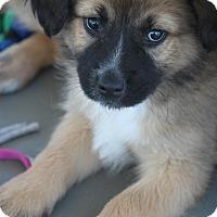 Adopt A Pet :: Tye D. ADOPTED! - Jewett City, CT