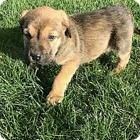Adopt A Pet :: Berry - Treton, ON