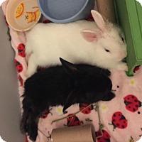 Adopt A Pet :: Diana - Los Angeles, CA