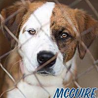 Adopt A Pet :: McGuire - Sidney, NE