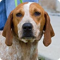 Adopt A Pet :: Sybil - Grayslake, IL