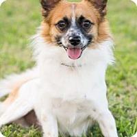 Adopt A Pet :: Swift - Santa Fe, TX