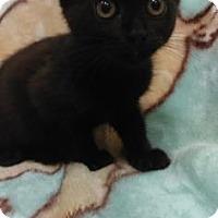 Adopt A Pet :: Bendi - Gulfport, MS