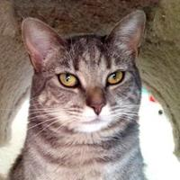 Adopt A Pet :: Polly Ann - Mountain Center, CA