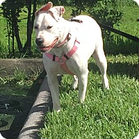 Adopt A Pet :: Ella - West Palm Beach, FL