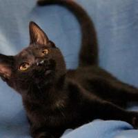 Adopt A Pet :: VICTOR - Bucyrus, OH