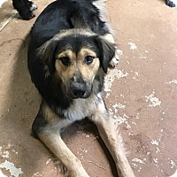Adopt A Pet :: Buster - Ashland, AL