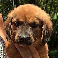 Adopt A Pet :: Mich#6F - Orlando, FL