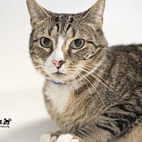 Adopt A Pet :: Pete - Alexandria, VA