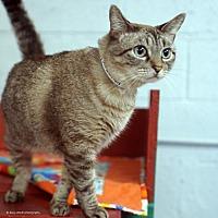 Adopt A Pet :: Carolina - Tucson, AZ