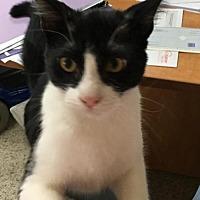 Adopt A Pet :: Andy - Elgin, TX