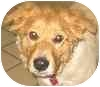 Shepherd (Unknown Type) Mix Dog for adoption in Eatontown, New Jersey - Rocky