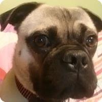 Adopt A Pet :: Lucky - Strasburg, CO