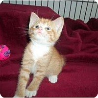 Adopt A Pet :: squirty magurty - Little Neck, NY