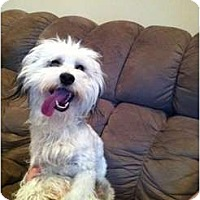 Adopt A Pet :: Payson - Oceanside, CA