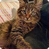 Adopt A Pet :: Lauren - Ocala, FL