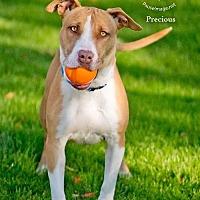 Adopt A Pet :: PRECIOUS 3 - Chandler, AZ