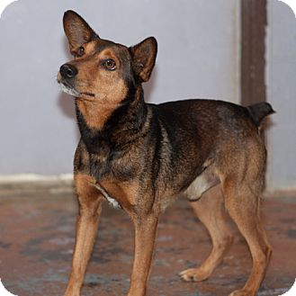 Terrier (Unknown Type, Small) Mix Dog for adoption in Wilmington, Delaware - Topper