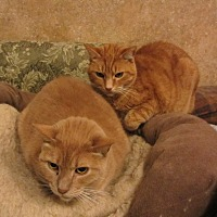 Adopt A Pet :: Rusty & Dagwood - Kingston, WA