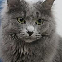 Adopt A Pet :: Day - Colorado Springs, CO